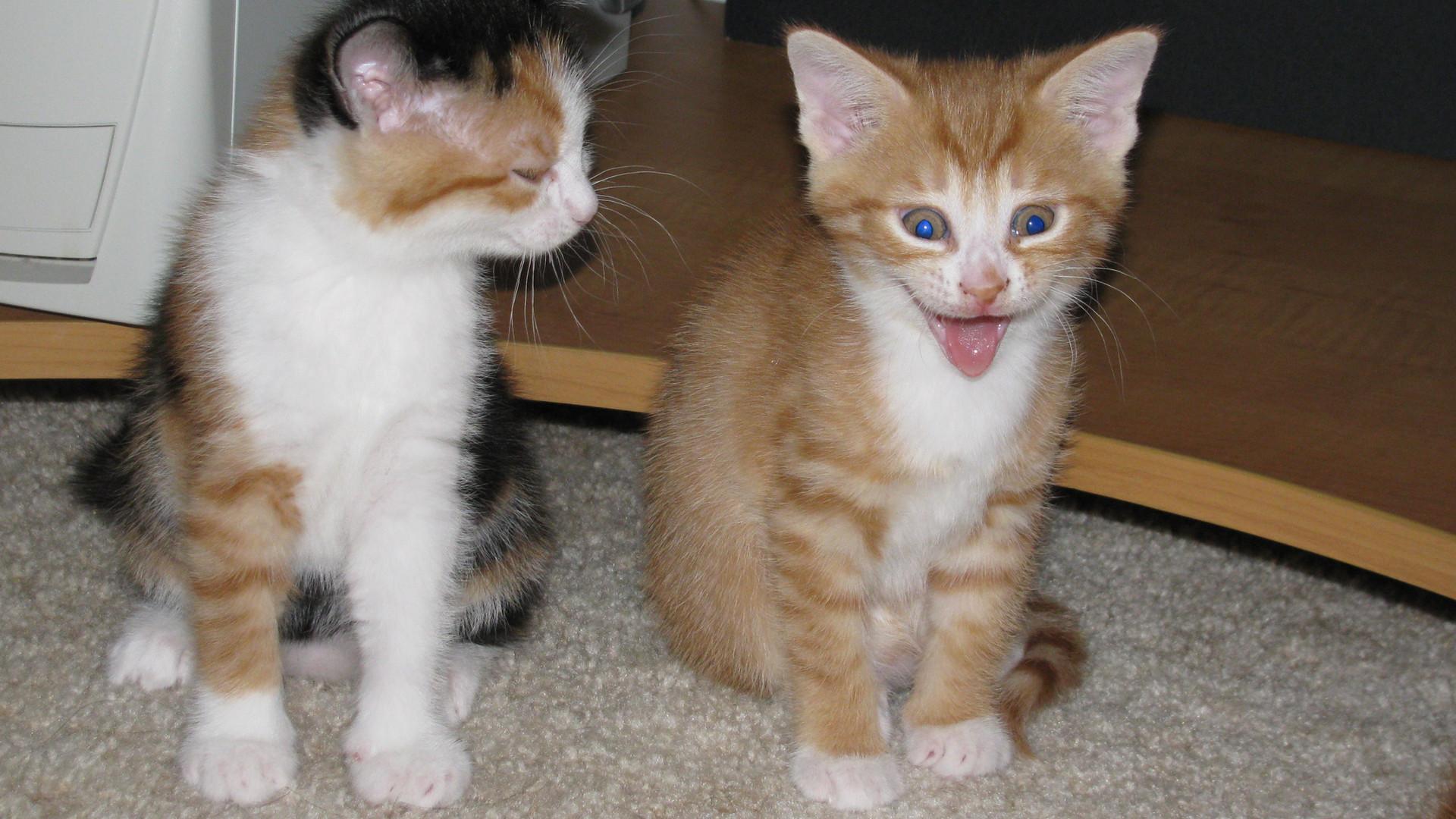 Kitten good expressions.JPG