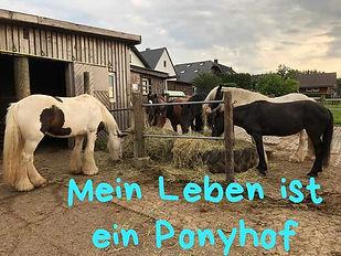 Mein Leben ist ein Ponyhof.jpg