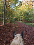 Frohrather Wald.jpg
