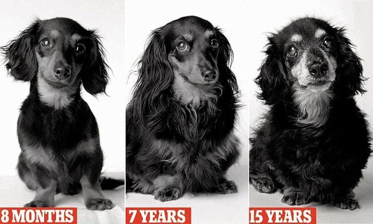 dogs for life.jpg