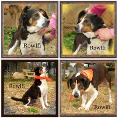 Rowlfi