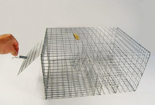 birdtrap.jpg