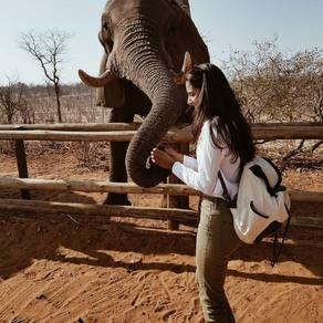 ELEPHANT RIDE AND FEEDING