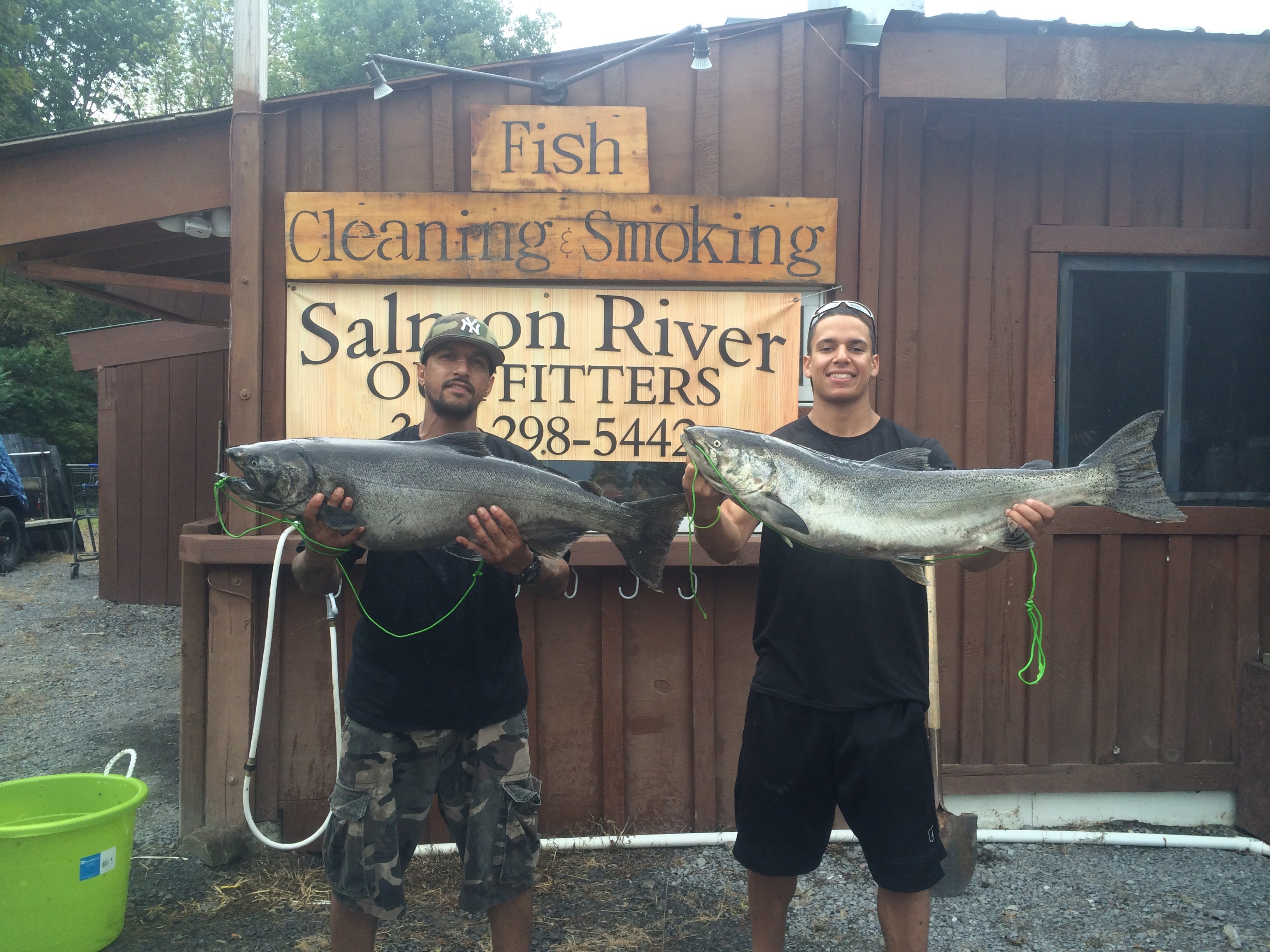 Two Great King Salmon