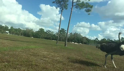 African Safari in Florids