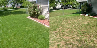 natural-lawns-min_edited.jpg