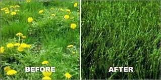 Professional Lawn Care Services, Weed Control