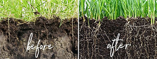 Root-growth-from-aeration-min_edited.jpg