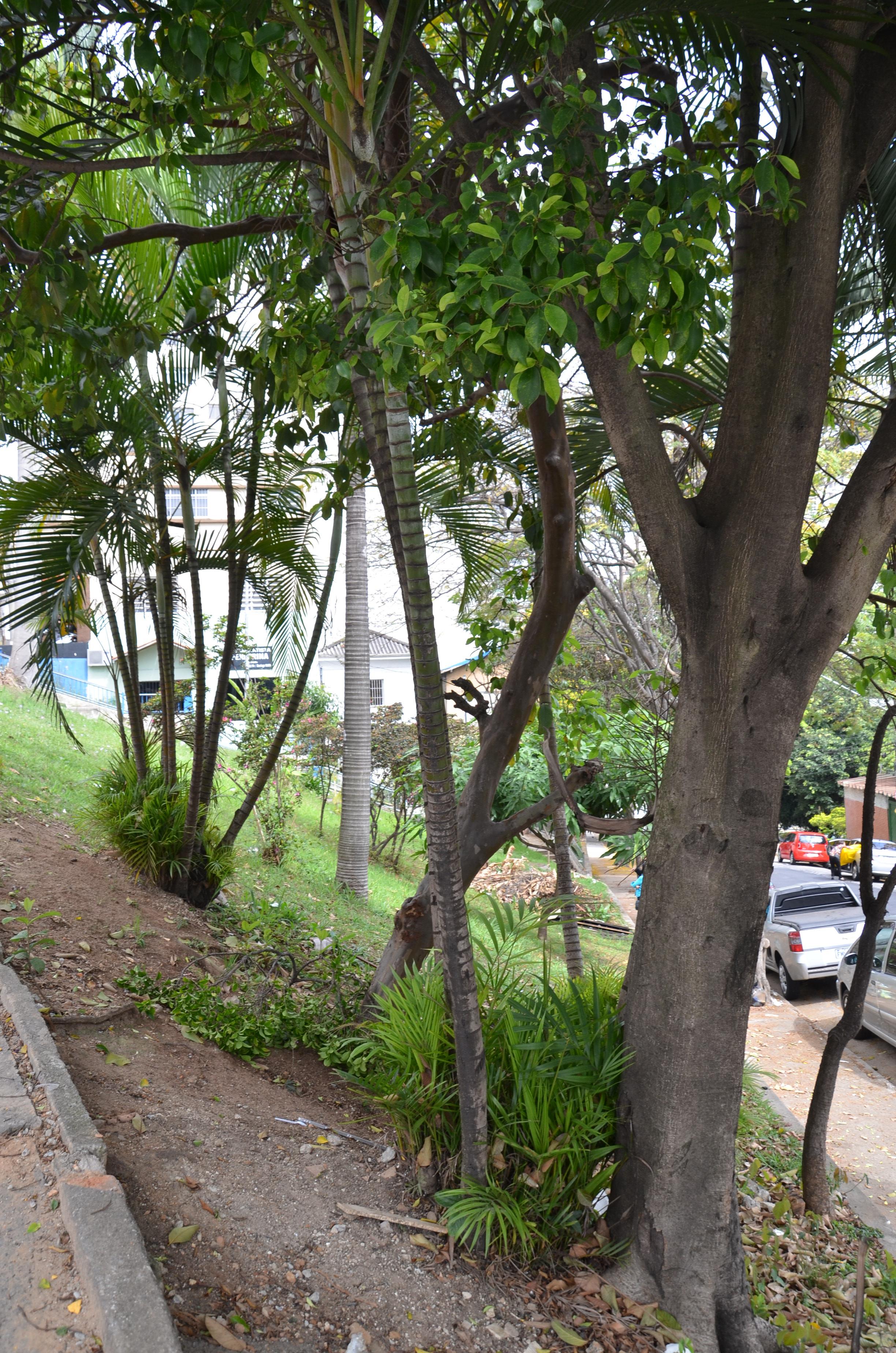 091 - Vista da Praça Bifurcação