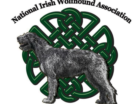 My journey as a Wolfhound Owner and how the National Irish Wolfhound Association began.
