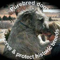 purebred dogs.jpg