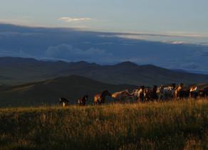 Når det regner i Mongolia
