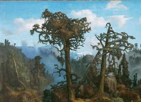 Skog huser skog
