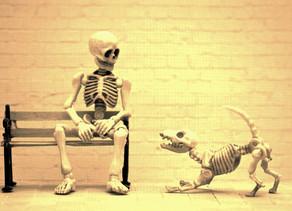 Herreløse hunder