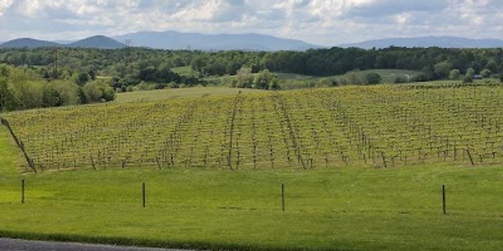 OCTOBER IS VIRGINIA WINE MONTH!!!