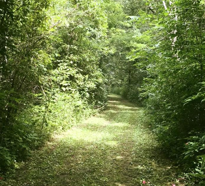 Path8.jpg