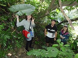 カヤックでマングローブの川へ!ピナイサーラの滝でカヌーツアー体験。