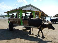 由布島と水牛車をコラボしたカヤックツアー