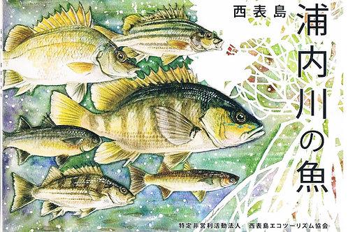 西表島 浦内川の魚