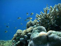 至るところに熱帯魚