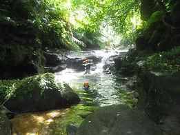 西表島のサガリバナをカヤックツアーで体験。