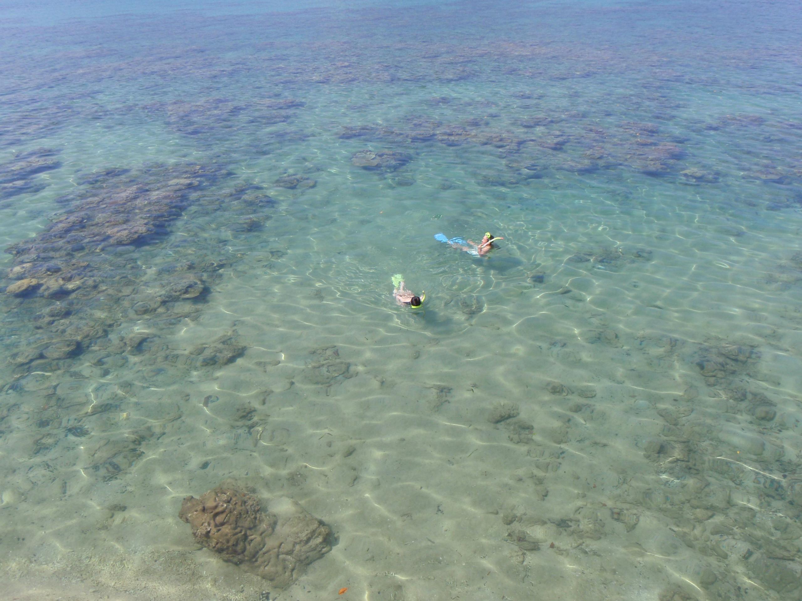 珊瑚がくっきり見えている