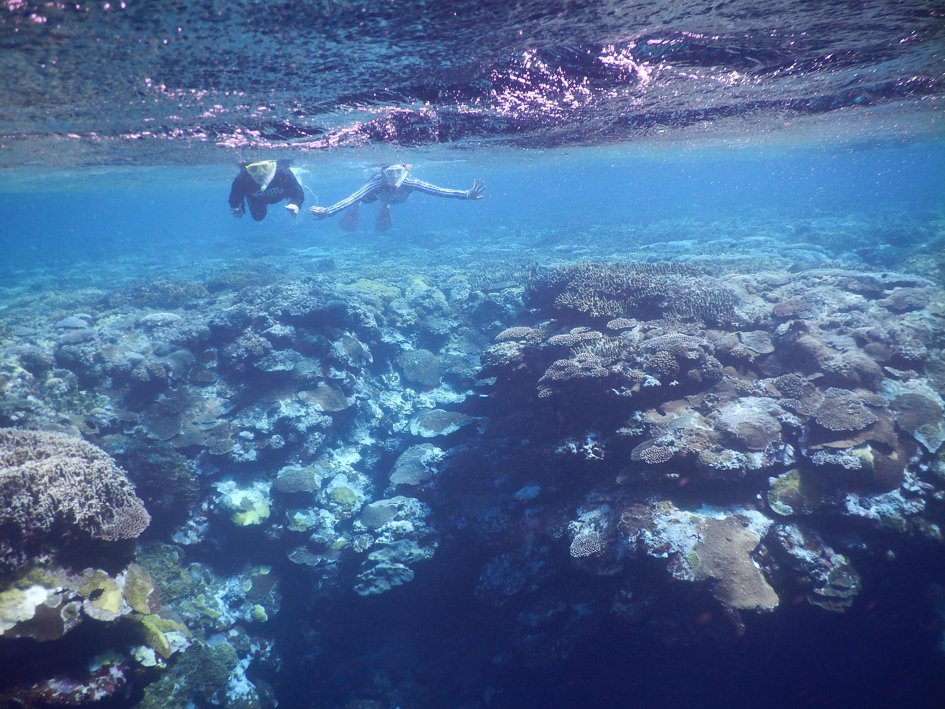 珊瑚の広がる海