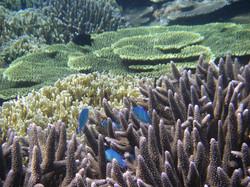 熱帯魚があちこちに