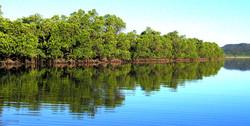 穏やかなマングローブの川