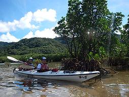 西表島のマングローブをシーカヤックで秘境探検。ナーラの滝カヌーツアー自然体験へ。