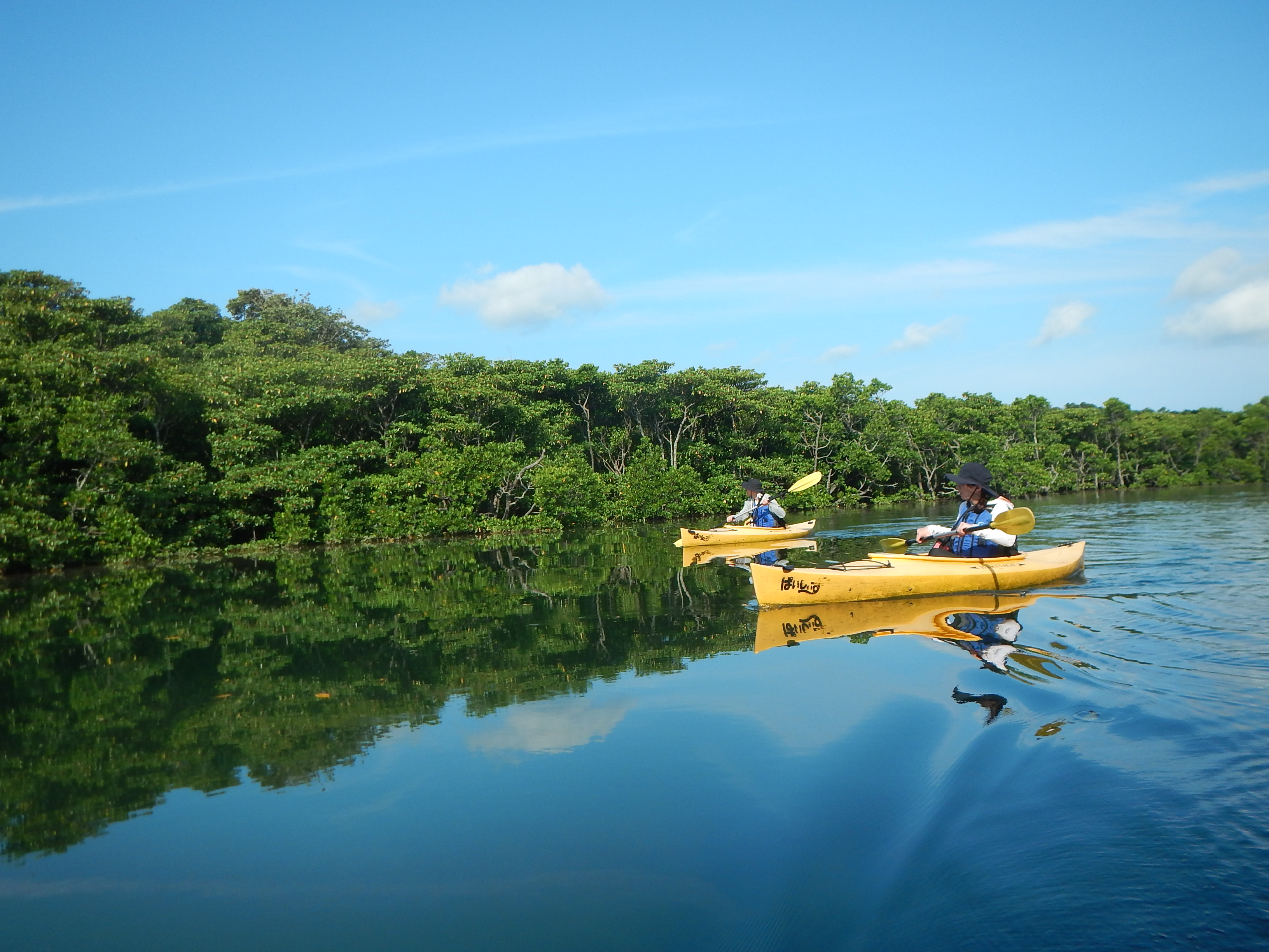 マングローブの映る川をゆく