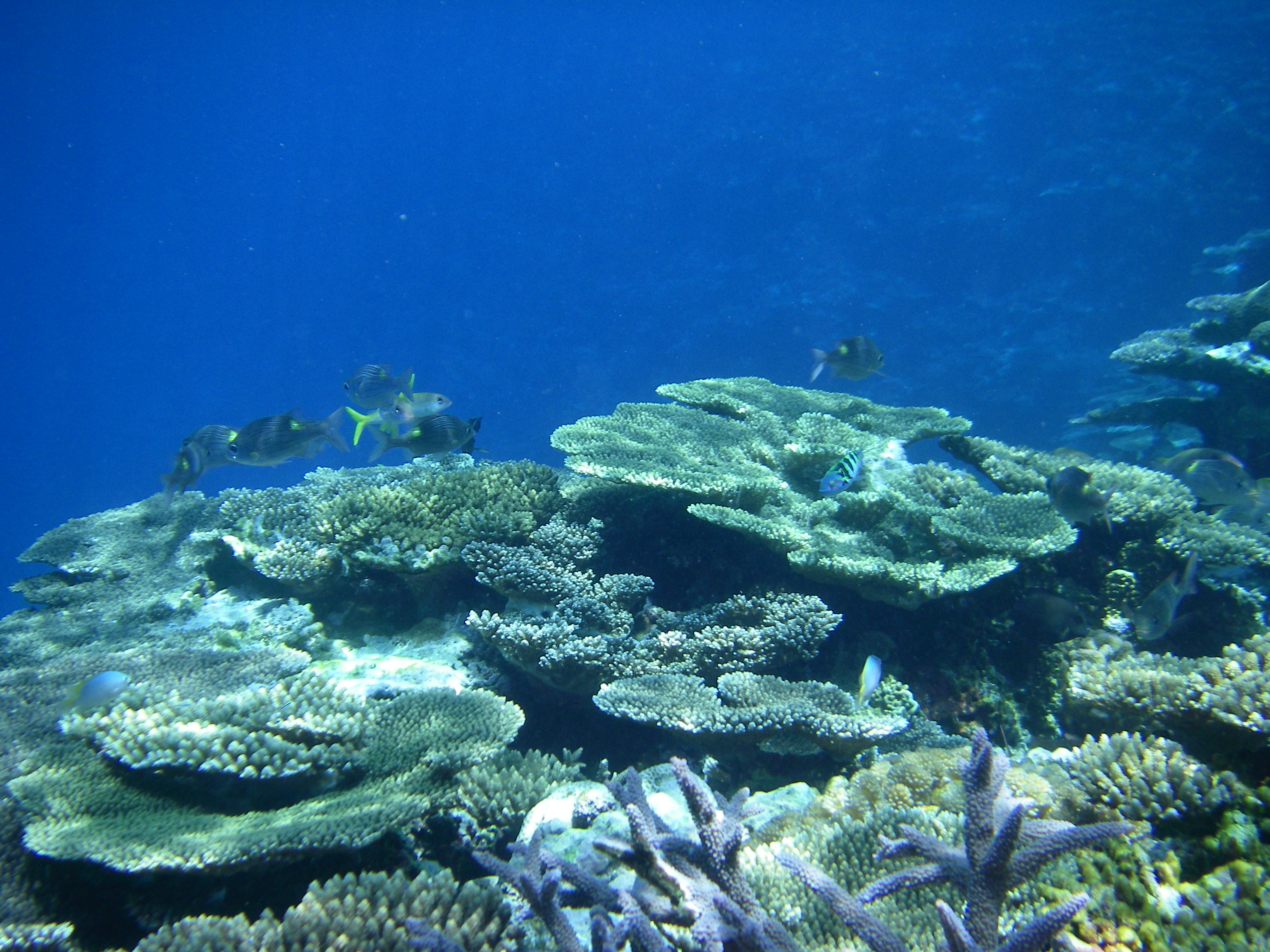 珊瑚とさかな