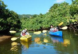 カヤックでマングローブの川へ!ピナイサーラの滝で半日カヌーツアー体験。