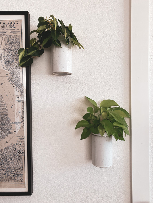 BWPDesign - Wall Plants