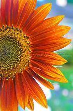 FlowerCards-3.jpg