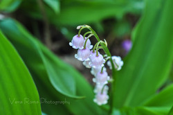 FlowerCards-13