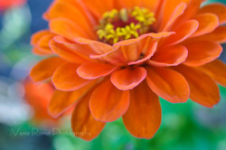 FlowerCards-6