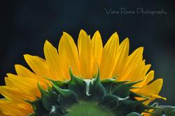 FlowerCards-1