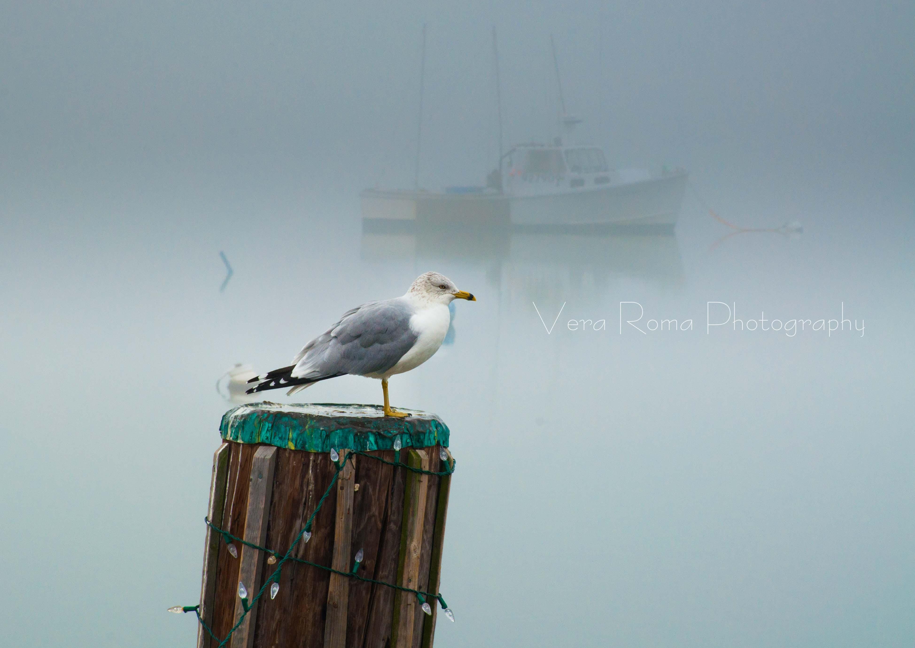 Foggy Dock & Park-13