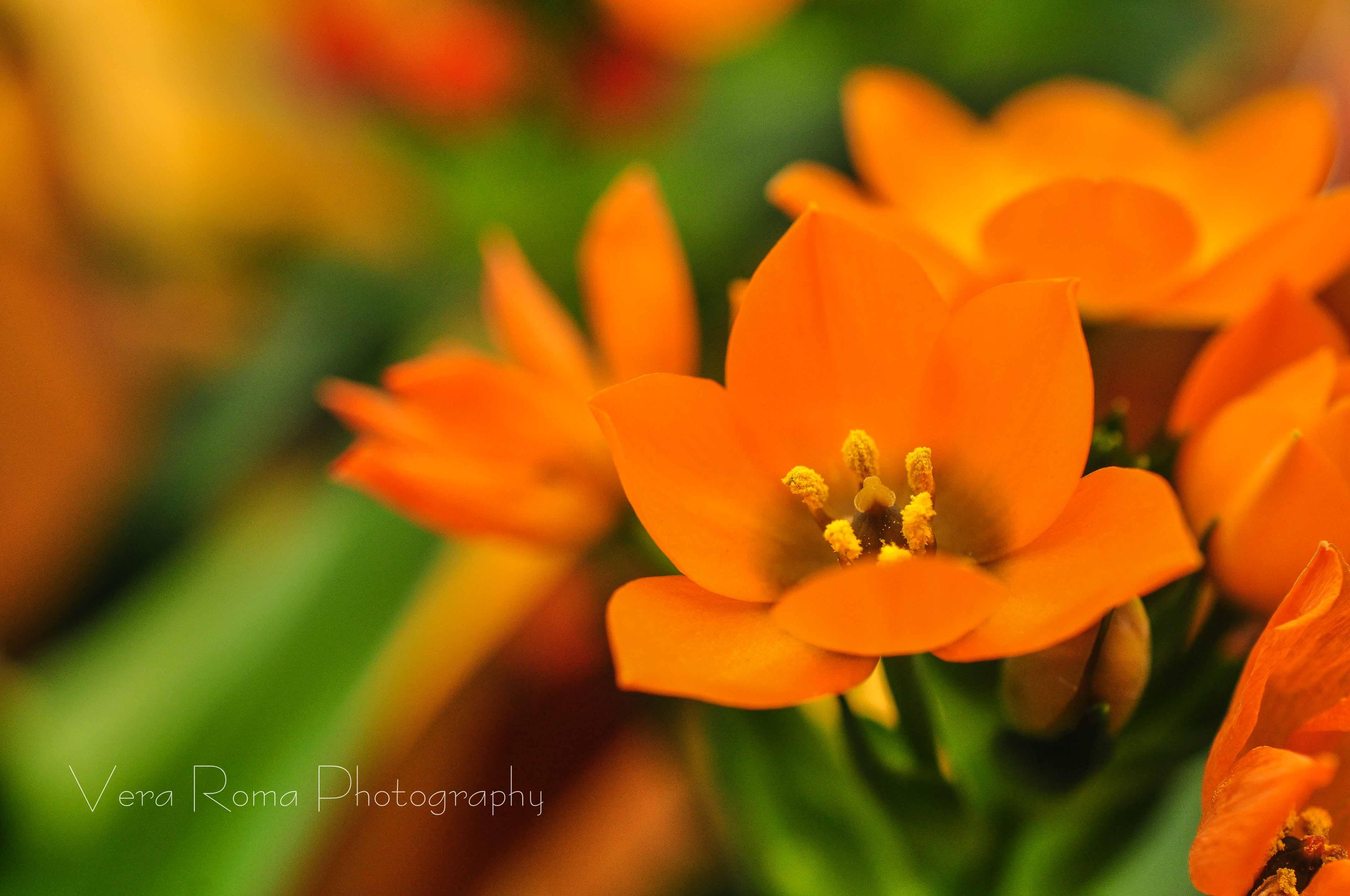 FlowerCards-11