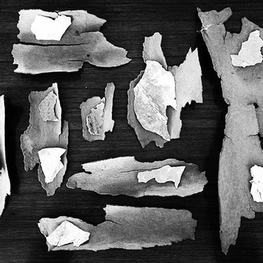Bark and Boat Flakes Assemblage