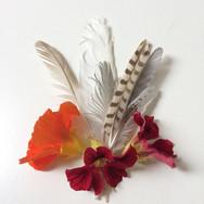 Feathers and Nasturtium Still Life 2018