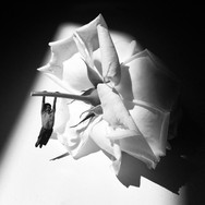 Boy on Rose Swing by Martha Haversham 2018