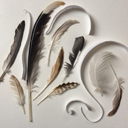 Compositon with feathers and torn paper 2018