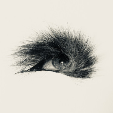 Eye and Tail Still Life 2018