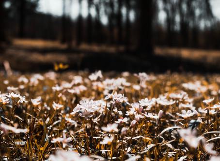 Spring Photos + Other stuff