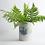 Thumbnail: vase coloré moyen
