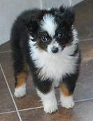 puppy pics 089.jpg
