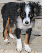 rosie-lilly pups jan 055.jpg