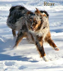 croppedsnow dogs 6.jpg